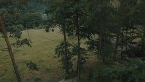 El bosque o la montaña almacen de video