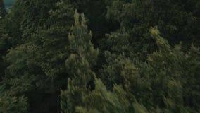 El bosque o la montaña almacen de metraje de vídeo