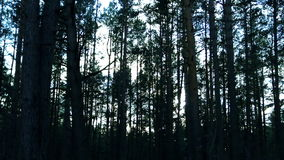 El bosque oscuro