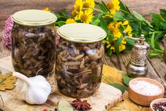 El bosque otoñal adobó setas en el tarro de cristal, sal, especias en la tabla de madera Fotos de archivo libres de regalías