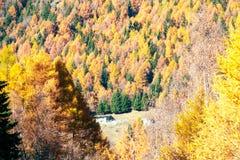 El bosque otoñal muestra su color Fotografía de archivo libre de regalías