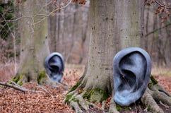 El bosque oye imágenes de archivo libres de regalías