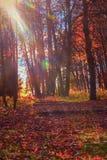 El bosque pintoresco del otoño, parque abandonado, sol irradia, salida del sol Caída de oro en bosque Imagen de archivo libre de regalías