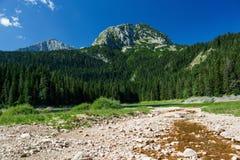 El bosque pintoresco del pino en el parque nacional Durmitor, Monte Foto de archivo