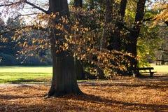 El bosque por la mañana Fotografía de archivo