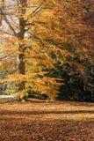 El bosque por la mañana Imagenes de archivo