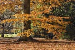 El bosque por la mañana Fotografía de archivo libre de regalías