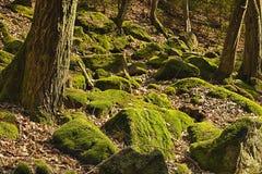 El bosque primitivo Fotos de archivo