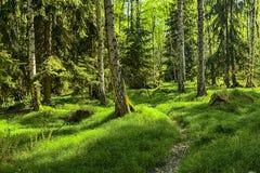 El bosque primitivo Imágenes de archivo libres de regalías