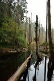 El bosque se enciende para veinte millas Imagenes de archivo