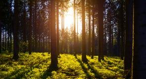 El bosque silencioso en primavera con el sol brillante hermoso irradia Fotografía de archivo