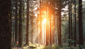 El bosque silencioso en primavera con el sol brillante hermoso irradia imágenes de archivo libres de regalías