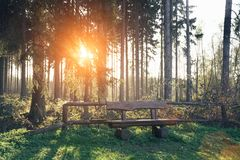 El bosque silencioso en primavera con el sol brillante hermoso irradia foto de archivo libre de regalías
