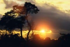 El bosque silencioso en primavera con el sol brillante hermoso irradia fotografía de archivo libre de regalías