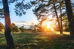 El bosque silencioso en primavera con el sol brillante hermoso irradia imagenes de archivo