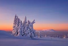 El bosque sitiado por la nieve está en las montañas de Ural del norte Imagen de archivo libre de regalías
