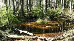 El bosque soleado de la primavera en primavera, el bosque se libera de nieve y de floraciones con todos los colores metrajes