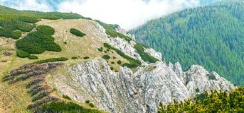 El bosque spruce en las cuestas de montañas Foto de archivo libre de regalías