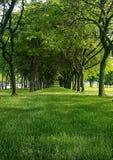 El bosque a través de los árboles Foto de archivo