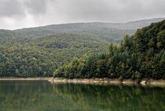El bosque verde Fotos de archivo