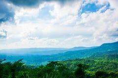 El bosque verde húmedo extenso en Tailandia foto de archivo libre de regalías