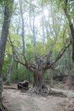 El bosque verde magnífico en septiembre Fotos de archivo