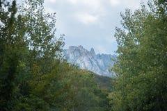 El bosque verde magnífico en septiembre Foto de archivo libre de regalías