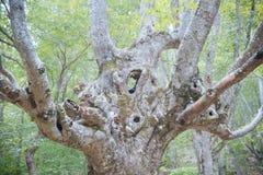 El bosque verde magnífico en septiembre Imagen de archivo