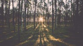 El bosque viejo con el musgo cubrió árboles y rayos del sol Imagenes de archivo