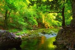 El bosque y el agua verdes fluyen con las piedras cubiertas de musgo Fotografía de archivo libre de regalías
