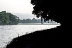 El bosque y el río Imagen de archivo