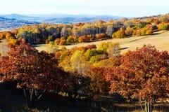 El bosque y las colinas del otoño en el prado Fotos de archivo