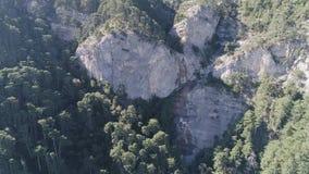 El bosque y las montañas coníferos ajardinan verde sereno del verano del paisaje del viaje tiro Opinión panorámica del abejón aér almacen de video
