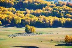 El bosque y las ovejas del otoño en la estepa Foto de archivo libre de regalías
