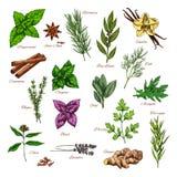 El bosquejo culinario de la hierba y de la especia para la comida diseña stock de ilustración