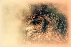 El bosquejo del Eagle-búho de Bengala Ejemplo de Digitaces Imagen de archivo