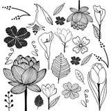 El bosquejo dibujado mano de la flor y de la hoja garabatea blanco y negro ilustración del vector