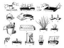 El bosquejo exhausto de la mano del vector de plantas cuida el ejemplo de proceso en el fondo blanco ilustración del vector