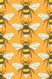 El bosquejo manosea la abeja en estilo del vintage Fotografía de archivo libre de regalías