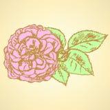 El bosquejo subió con las hojas, fondo del vector Imágenes de archivo libres de regalías