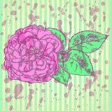 El bosquejo subió con las hojas, fondo del vector Fotos de archivo libres de regalías