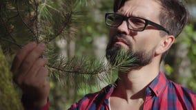 El botánico de sexo masculino moderno estudia las plantas coníferas, toca la rama spruce metrajes