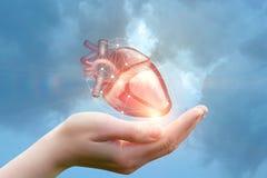 El brazo apoya el corazón Imágenes de archivo libres de regalías