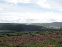 El brezo cubrió las colinas Imagen de archivo libre de regalías