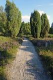 El brezo florece el flor en agosto Fotografía de archivo
