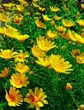 El brillar intensamente amarillo Fotos de archivo libres de regalías