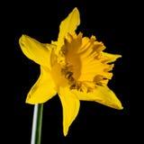 El brillar intensamente amarillo Foto de archivo