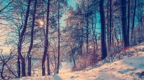 El brillar intensamente del paisaje del invierno Foto de archivo