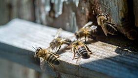 El brillo del sol en la entrada de una colmena vieja, cierre para arriba abejas Foto de archivo libre de regalías