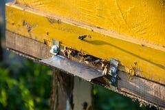 El brillo del sol en la entrada de una colmena vieja, cierre para arriba Abejas listas para comenzar a polinizar las plantas Fotografía de archivo
